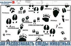 Научись распознавать следы животных!