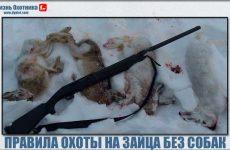 Секреты и правила охоты на зайцев без собак!