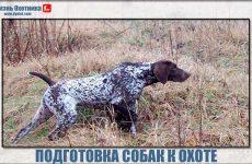 Полевая подготовка собак!