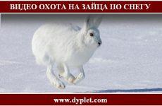 Видео охота на зайца по снегу