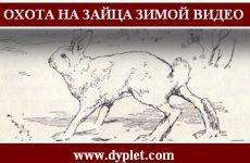 Охота на зайца зимой видео