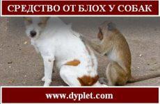 Средство от блох у собак