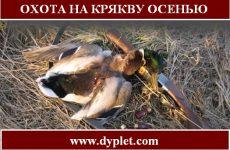 Охота на крякву осенью