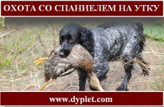Охота со спаниелем на утку
