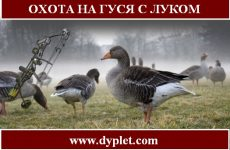 Охота на гуся с луком