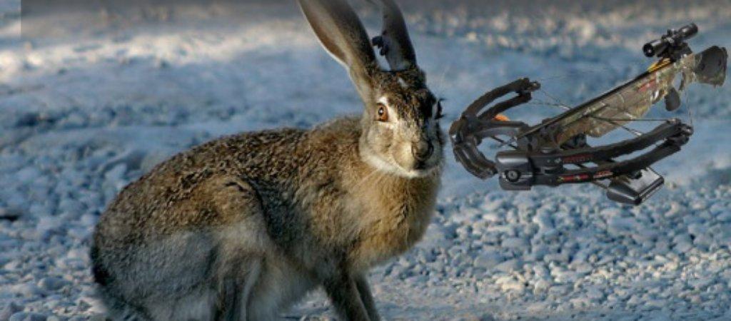Охота с арбалетом на зайца