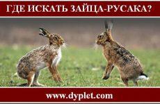 Где искать зайца?