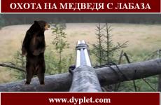 Охота на медведя с лабаза