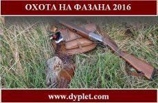 Охота на фазана 2016 видео