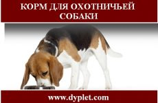 Корм для охотничьей собаки