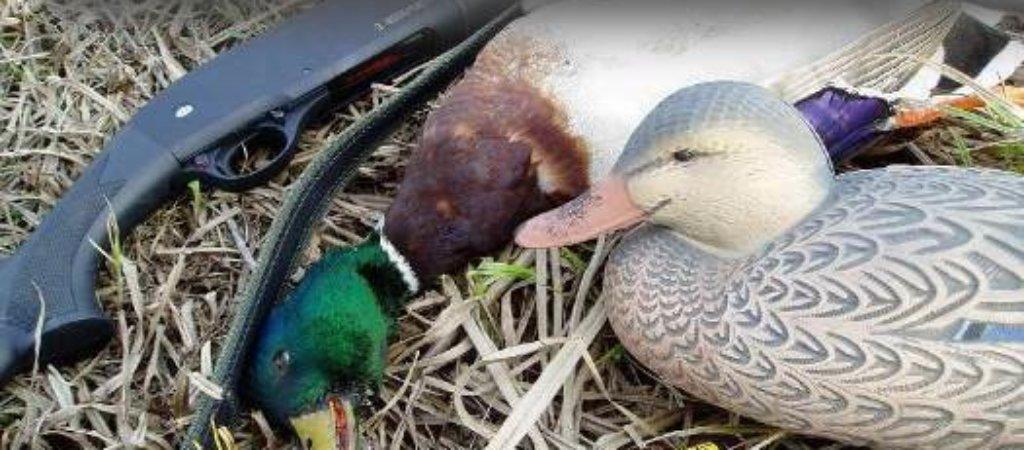 Охота весной. Популярные и разрешённые способы