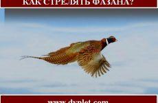 Как стрелять фазана?
