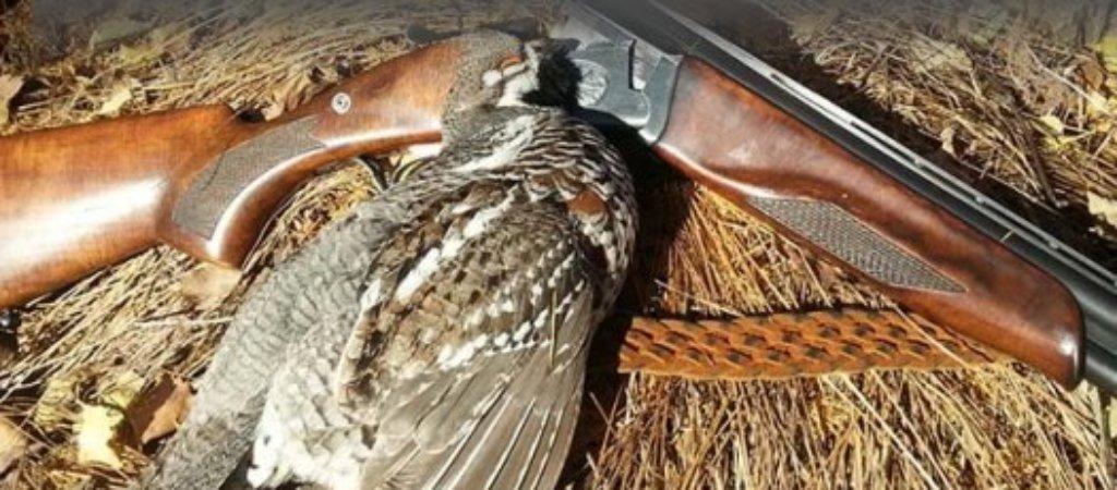 Охота на рябчика осенью. Советы охотника