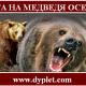 Охота на медведя осенью. Как и что делать?