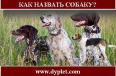 Как назвать охотничью собаку? Советы по кличкам