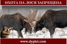 Охота на лося запрещена. Мораторий на 25 лет в Украине