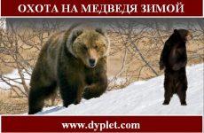 Охота на медведя зимой. Как нужно охотиться?