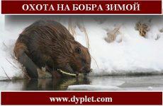 Охота на бобра зимой. Сложности и проверенные способы
