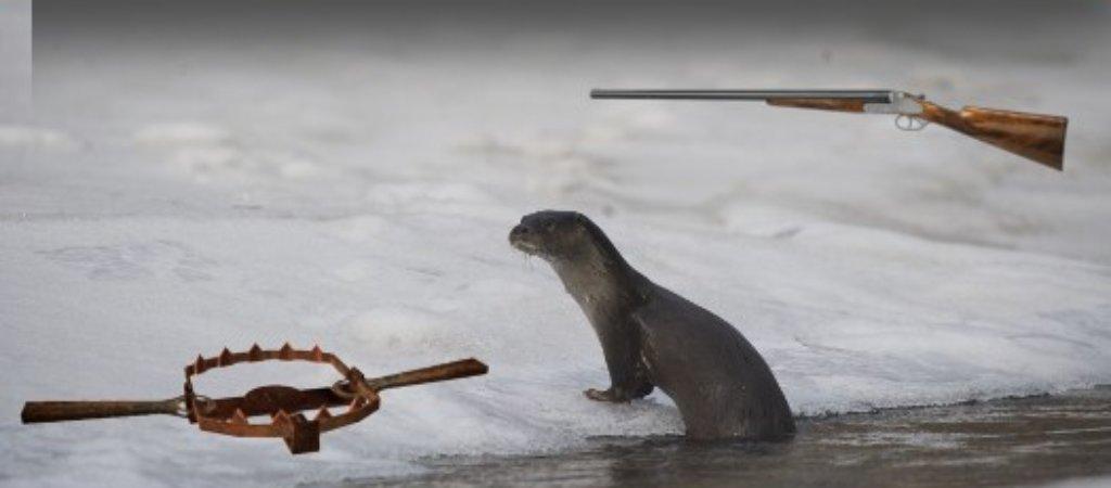 Охота на выдру зимой. Как и с чем охотиться?