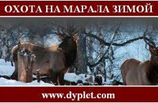 Охота на марала зимой с подхода. Советы охотнику