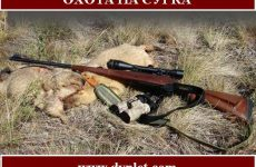 Охота на сурка. Выбор оружия и особенности охоты