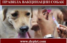 Правила вакцинации собак. Сколько и как это делать?
