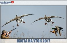 Охота на уток 2017. Подборка лучших видео с охоты