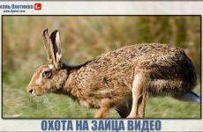 Охота на зайца на видео. Отличная подборка