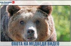 Охота на медведя видео. Опасные моменты и отличные выстрелы