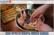 Как приготовить мясо зайца? Готовим в духовке и мультиварке