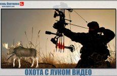 Охота с луком видео. Сущность и детали процесса