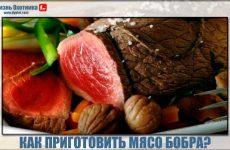 Как приготовить мясо бобра? Лучшие рецепты в духовке, котлеты и шашлык