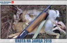 Охота на зайца 2018. Подборка новейших видео