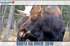 Охота на лося 2018. Новинки видео с мест событий