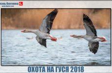 Охота на гуся 2018. Видео с Якутии, Южного Нью-Йорка и Канзаса