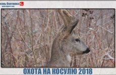 Охота на косулю 2018. Видео с массой впечатлений