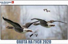 Незабываемая охота на гуся 2020. Видео с долгожданными моментами