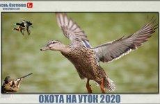 Крайне редкая охота на уток 2020. Эксклюзивные видео нового сезона
