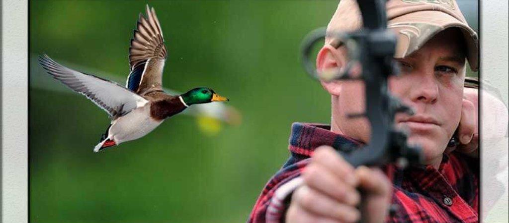 Новый вид охоты в России — охота с луком. Что об этом необходимо знать?